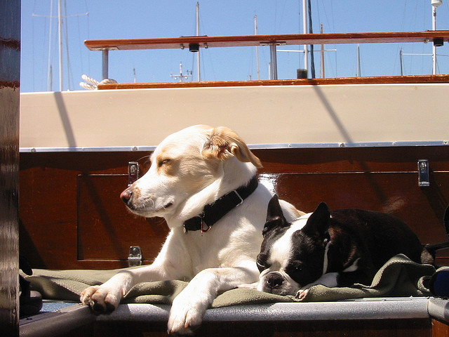 dogs on a boat