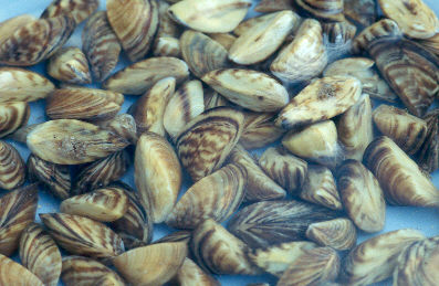 U.S. Boaters Warned To Look Out For Invasive Aquatic Species