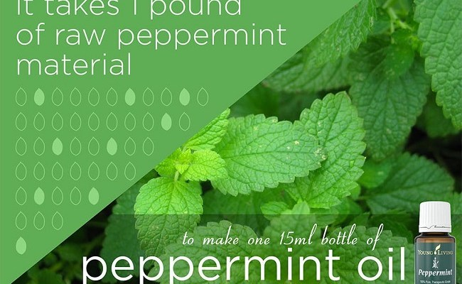 3 Uses for Peppermint Young Living Essential Oil