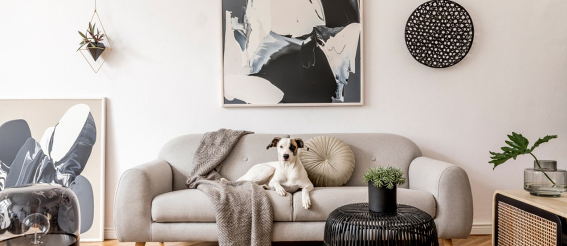 White interior with dog