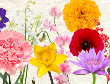 Flower Power: Color Inspirations for Your Space | MyBoysen