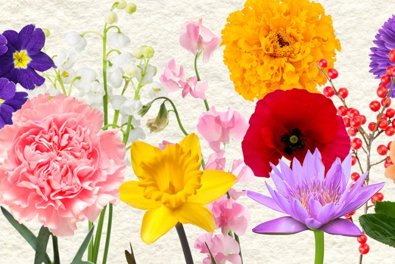 Flower Power: Color Inspirations for Your Space   MyBoysen