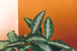 5 Ways to Add and Use Orange in Your Home | MyBoysen