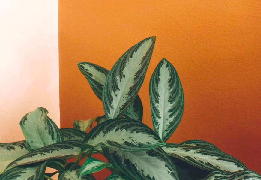 5 Ways to Add and Use Orange in Your Home