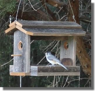 Bird Feeder & Bird House Plans