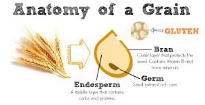 anatomy-of-a-grain