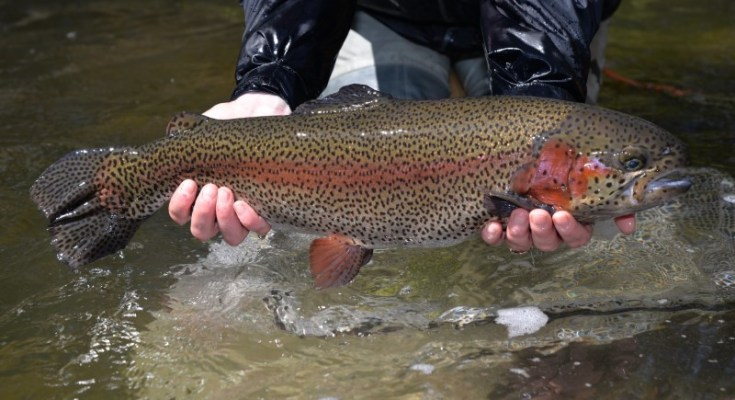 Pennsylvania's 2020 Adult Trout Stocking Schedule Now Available