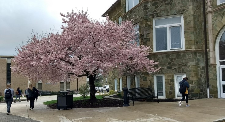 West Chester University Earns Tree Campus USA Recognition for Eighth Consecutive Year