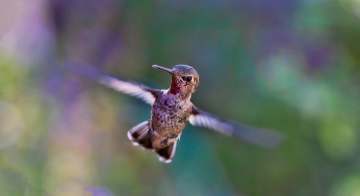 Incoming Hummingbirds Will Brighten Homelife