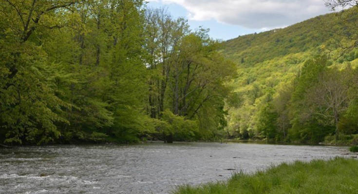DCNR Seeking Online Public Input on Pennsylvania's Public and Private Forests