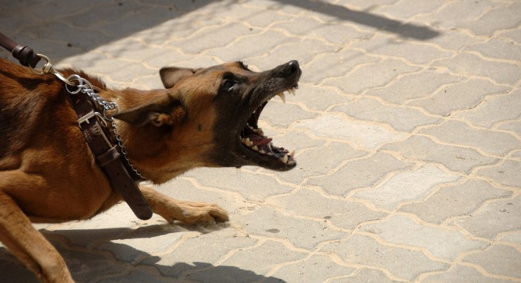 U.S. Postal Service Releases Dog Attack National Rankings