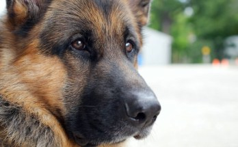 National Academies Affirms Scientific Necessity of VA Canine Research