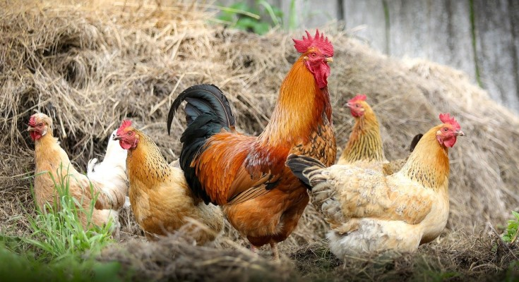 $375,000 in PA Farm Bill Funds Available to Grow Livestock, Poultry Industries