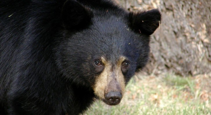 Pennsylvania's Bear Check Stations to Undergo Changes