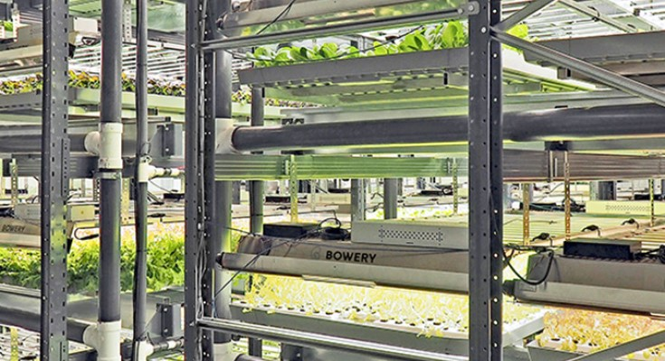 Smart Indoor Vertical Farm to Open in Pennsylvania, Bringing New Jobs, Sustainability,and Food Security