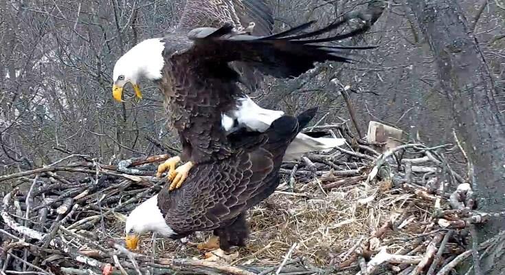 Hanover Eagles