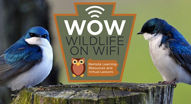 Wildlife on WiFi