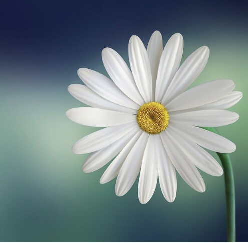 E tu che fiore sei? / And what flower are you?