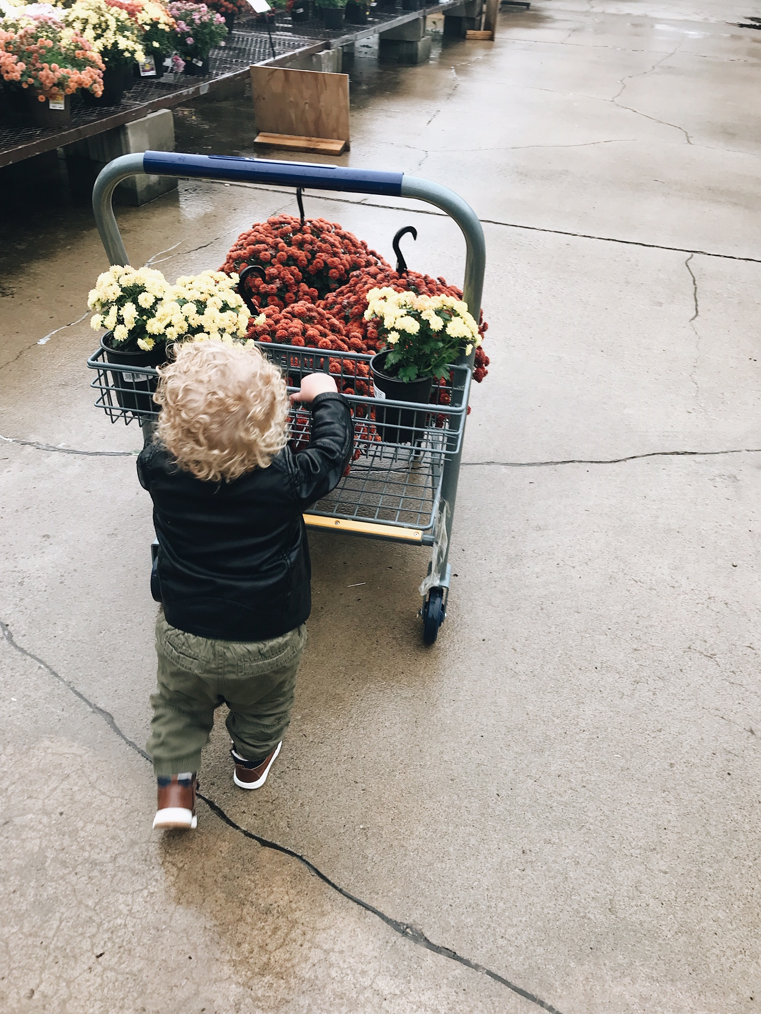 pushing a cart of mums