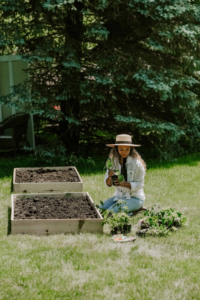 raised veggie garden beds