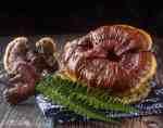 Reishi Mushroom Taste Reviews and Cooking Guide