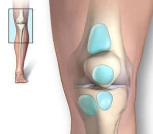 bursae of knee joint