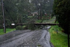 A tree fell across the road at the intersection of Rice Lane and Lorraine Drive in Beacon Falls. Residents of Rice Lane and Rice Lane Extension were unable to get off their dead end street for several hours while they awaited clean up crews to arrive. - CONTRIBUTED