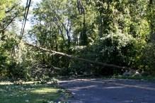 A tree blocks traffic on Scott Road in Prospect Monday morning. - LARAINE WESCHLER