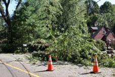A tree took down wires on Matthews Street in Prospect. - LARAINE WESCHLERS