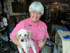 Poodle rescuer Daryl Masone holds Sophia, one of five toy poodles found abandoned by the side of the road in New Fairfield, in her garage as another rescued poodle looks on last year. –RA ARCHIVE