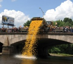 The Naugatuck Chamber of Commerce's 8th Annual Duck Day and Race will be held in June. –FILE PHOTO