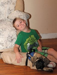 Collin Northrup, 8, relaxes with Lady, a 13-week-old English Mastiff, last week at their home in Naugatuck. Lady will be trained to be a service dog for Collin, who has Down syndrome, and his family is raising money to help pay for the training. –ELIO GUGLIOTTI