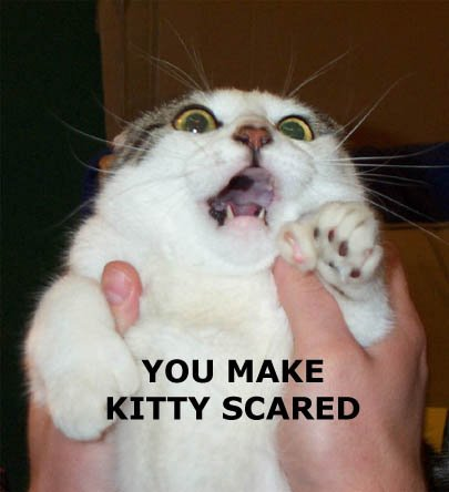 you_make_kitty_scared