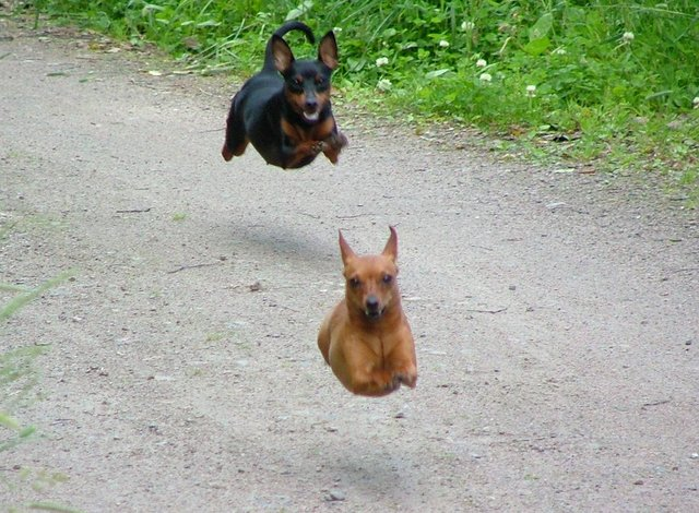 hover-dogs.jpg