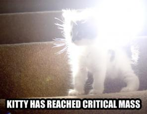 critical-mass-kitty.jpg