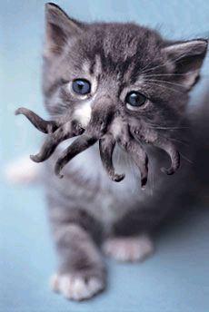 cthulhu-kitty.jpg