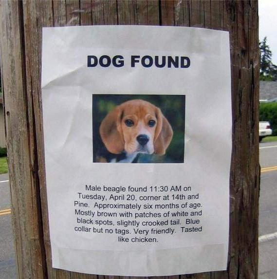dogfoundyc3.jpg