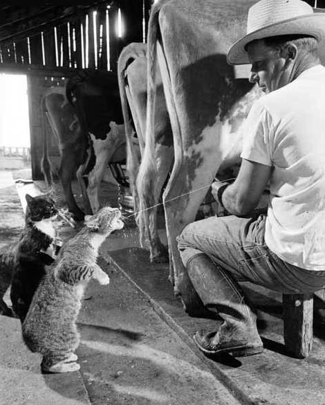 milk-for-kitty.jpg