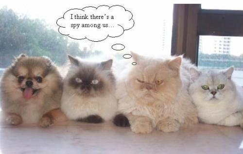 catspy.jpg