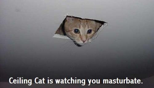 ceiling_cat_00.jpg