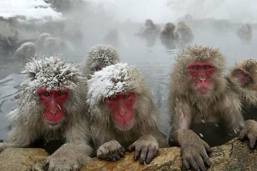 ice-monkey.jpg