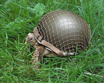 turtle-soldier.jpg