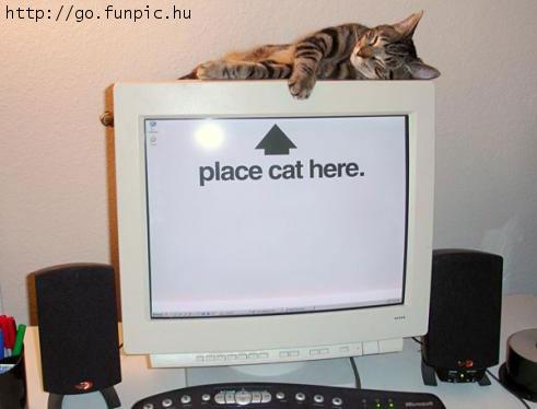 place-cat-here.jpg