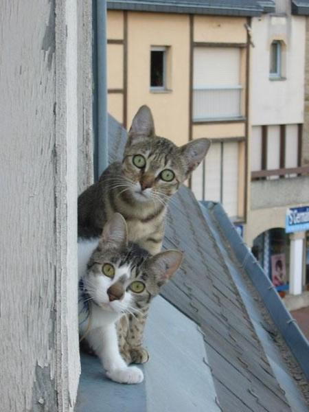 cat-questioning-look.jpg