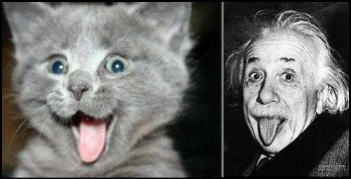 einstein_20reincarnation_small.jpg