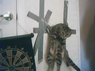 tape_cat.jpg