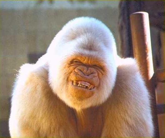 cute-ape.jpg