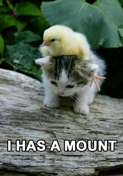 duck-kitten-i-has-a-mount.jpg