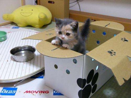 kitten-box.jpg