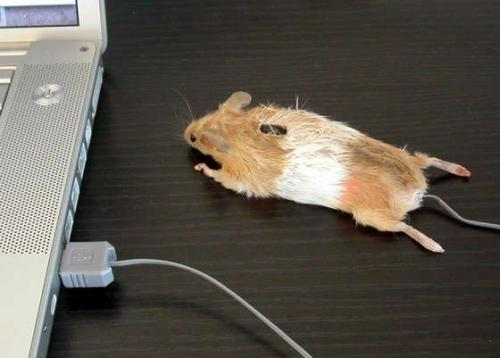 mouse-mouse.jpg